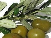 hojas olivo propiedades medicinales