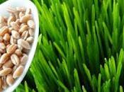 Wheatgrass super Alimento