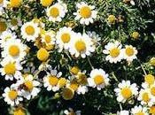 Remedios naturales Andes bajos ecuatorianos (II)