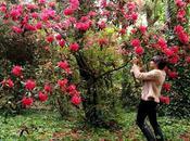 Ruta Camelia: jardín Saleta primavera, junio 2016. Camellia Route: Saleta's Garden spring, June, 1-30,