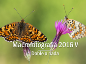 Macro 2016