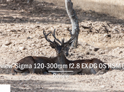 Review Sigma 120-300mm f2.8