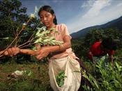 Campaña Bolivia: mujeres Indígenas masticarán coca plazas país