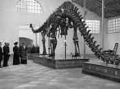 """""""Historia Diplodocus carnegii MNCN: primer esqueleto dinosaurio montado Península Ibérica""""."""