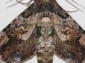 gusano, mariposa