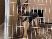 Pastor alemán perrera Movera, sacrificio inminente (Zaragoza)
