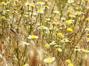 Flores campo