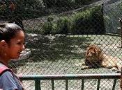 Venezuela: mueren animales zoológicos falta comida