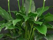 Plantas purifican