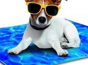 Gadgets para disfrutar veranoAlfombra refrigerante Tri...