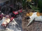 Denuncia: Matanza perros Residencial Bugambilias