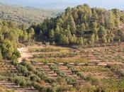 Orto Vins: trabajo bien hecho viticultores Masroig
