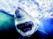 'Sharks', Michael Muller, libro fotógrafo mismo retrata estrellas Hollywood tiburones