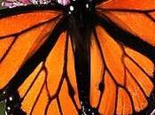 Matemáticas para explicar largo viaje mariposas monarca