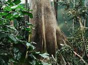 selva amazónica tiene 11.600 especies arboles