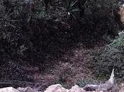 Destrozan sendero ancestral para vehículos Catacocha