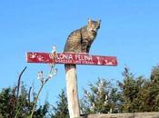 gatos colonia felina Pallosu (Cerdeña)