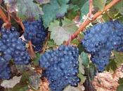 Vinos Vetusta, calidad para paladares exigentes