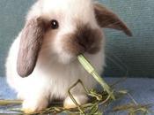 Cuantas Razas Conejos Hay. Conoce Respuesta Aquí!