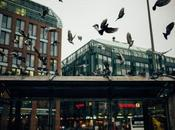 Enfermedades transmiten palomas