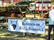 Semana Barrosão villa Salto, Montalegre