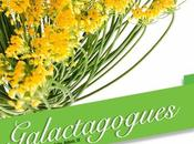 Lactancia respetuosa: consejeras, hierbas, aceites