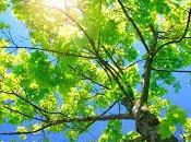 ¿Qué significa soñar ramas?
