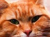 gato callejero llamado Bob. James Bowen