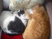 fieles amigos dormido