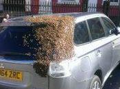 Esta razón miles abejas persiguen este coche.