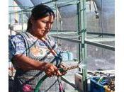plataforma acción ONU: mujer, medio ambiente desarrollo sostenible