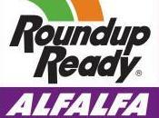 alfalfa transgénica Roundup Ready volverá campos estadounidenses primavera