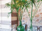 Planta papiro como parte decoración.