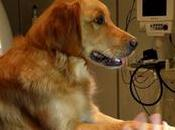 estudio demuestra perros entienden decimos