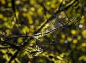hamaca araña