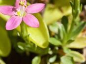 """informe Centaurea"""""""