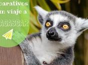 Madagascar: preparativos viaje