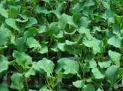 Plantel hortícola libre químicos.