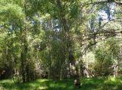 Verdeando agosto Sierra Norte