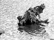Historia viejo árbol