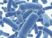 Probióticos: ayuda para