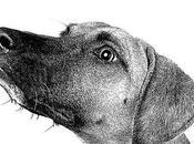 camino perro