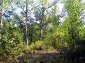 Bosques verano