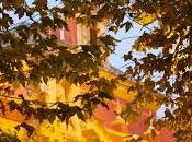 Júbilo otoño