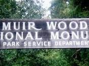 Muir Woods. Viajamos hasta bosque secuoyas gigantes California