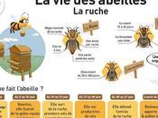 Posters: vida abejas affiches: abeilles.