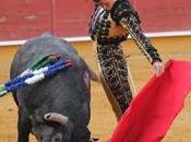 """Daniel luque, adolfo martín marco galán hacen galardones trofeos taurinos """"coso canteras"""""""