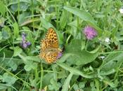 Lunes, septiembre 2016: Efecto mariposa
