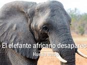 elefante africano desaparece