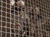 Tráfico ilegal primates